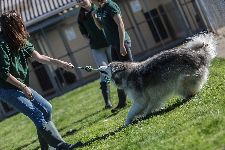 Three Oaks Dog Boarding Kennels Southampton Hampshire